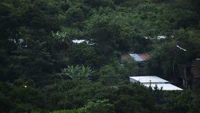 Πουλί κατά την πτήση πέρα από τη ζούγκλα απόθεμα βίντεο