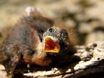 πουλί λίγο ouside φωλιών στοκ εικόνα με δικαίωμα ελεύθερης χρήσης