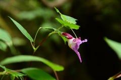 Πουλί λουλουδιών Στοκ Εικόνα