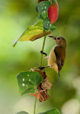 πουλί μικροσκοπικό Στοκ Φωτογραφίες
