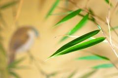 πουλί μπαμπού Στοκ Εικόνες