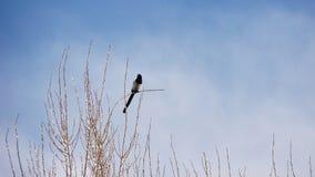 Πουλί μόνο σε έναν κλάδο το χειμώνα στοκ εικόνες με δικαίωμα ελεύθερης χρήσης