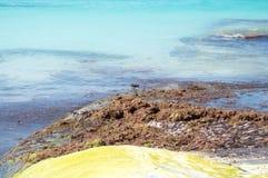 Πουλί Νησί Isla Mujeres Μεξικό Στοκ εικόνες με δικαίωμα ελεύθερης χρήσης