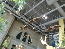 Πουλί ουρανού Στοκ εικόνες με δικαίωμα ελεύθερης χρήσης
