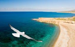 πουλί πέρα από τη θάλασσα Στοκ Εικόνα