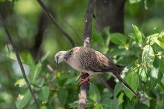Πουλί (περιστέρι, περιστέρι ή αποσαφήνιση) σε μια φύση στοκ εικόνα