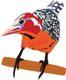 πουλί πολύχρωμο στοκ φωτογραφία