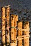 Πουλί που απολαμβάνει τον ήλιο Στοκ Φωτογραφίες