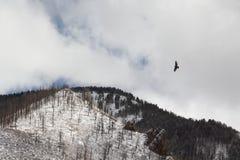 Πουλί που πετά στα ύψη επάνω από το βουνό στοκ εικόνες