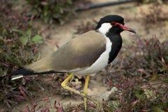 Πουλί που στέκεται υπέροχα στην εξωτική φύση στοκ εικόνες με δικαίωμα ελεύθερης χρήσης