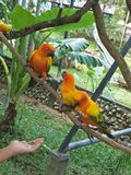 Πουλί σε έναν ζωολογικό κήπο στοκ φωτογραφίες