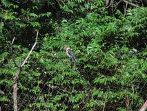 Πουλί στις άγρια περιοχές στοκ εικόνα