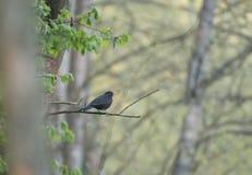 Πουλί στον κλάδο Κλάδος ενός δέντρου Πράσινα φύλλα στο δέντρο στοκ φωτογραφία με δικαίωμα ελεύθερης χρήσης