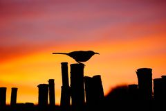 Πουλί στο ηλιοβασίλεμα στοκ φωτογραφία με δικαίωμα ελεύθερης χρήσης