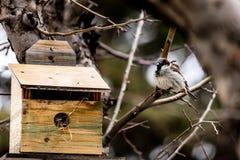 Πουλί στο σπίτι στοκ φωτογραφίες