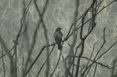 πουλί τέχνης Στοκ Φωτογραφίες