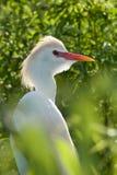 πουλί τροπικό Στοκ εικόνες με δικαίωμα ελεύθερης χρήσης