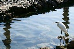 πουλί Στοκ Φωτογραφία