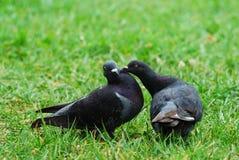 πουλί Στοκ Εικόνα