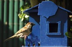πουλί Στοκ φωτογραφία με δικαίωμα ελεύθερης χρήσης