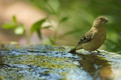 πουλί Στοκ Φωτογραφίες
