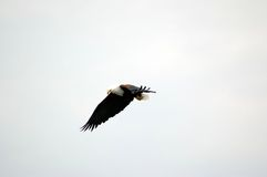 πουλί 89 Στοκ φωτογραφίες με δικαίωμα ελεύθερης χρήσης