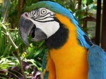 πουλί arara στοκ εικόνες