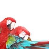 πουλί macaw Στοκ εικόνα με δικαίωμα ελεύθερης χρήσης