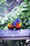 Πουλιά αγάπης και ένα δέντρο στοκ φωτογραφίες