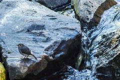 Πουλιά από το νερό Στοκ φωτογραφία με δικαίωμα ελεύθερης χρήσης
