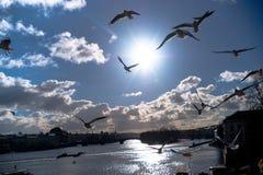 Πουλιά επάνω από Vltava στα σύννεφα Ο φωτεινός ήλιος στο μπλε ουρανό Στοκ φωτογραφία με δικαίωμα ελεύθερης χρήσης