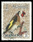 Πουλιά, ευρωπαϊκό Goldfinch διανυσματική απεικόνιση