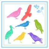 πουλιά ζωηρόχρωμα στοκ φωτογραφίες