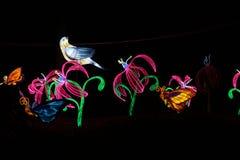 Πουλιά και λουλούδια στο κινεζικό φεστιβάλ φαναριών στοκ φωτογραφίες με δικαίωμα ελεύθερης χρήσης
