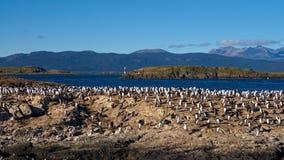 Πουλιά και φάρος στο κανάλι λαγωνικών κοντά σε Ushuaia στοκ εικόνες με δικαίωμα ελεύθερης χρήσης