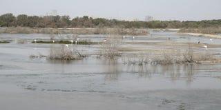 Πουλιά και flamenco στο τοπίο νερού λιμνών στοκ εικόνα