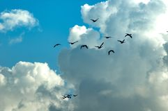 Πουλιά κατά την πτήση Στοκ φωτογραφίες με δικαίωμα ελεύθερης χρήσης