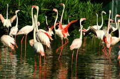 πουλιά ο κόσμος μας Στοκ Εικόνες