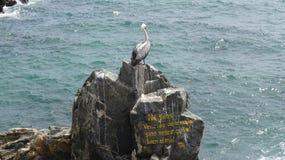 Πουλιά πελεκάνων σε μια δύσκολη παραλία στοκ φωτογραφία