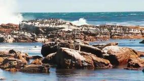 Πουλιά που κάθονται στο βράχο δίπλα στην καταστροφή του ωκεάνιου κύματος απόθεμα βίντεο