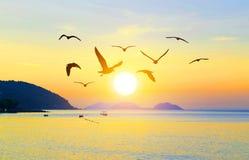 Πουλιά που πετούν την ελευθερία στα βουνά και το φως του ήλιου στοκ εικόνες
