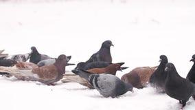 Πουλιά που ταΐζουν στο χειμώνα απόθεμα βίντεο