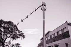 Πουλιά σε ένα καλώδιο ενάντια στον ουρανό Στοκ φωτογραφία με δικαίωμα ελεύθερης χρήσης