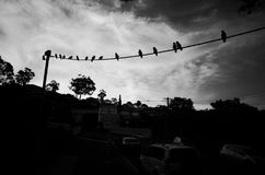 Πουλιά σε ένα καλώδιο ενάντια στο νεφελώδη ουρανό Στοκ εικόνα με δικαίωμα ελεύθερης χρήσης