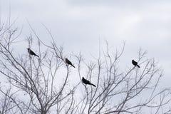 Πουλιά σε μια κορυφή δέντρων το χειμώνα Ψηφιακή ελαιογραφία Στοκ εικόνα με δικαίωμα ελεύθερης χρήσης