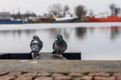 Πουλιά στην αποβάθρα λιμένων Μια συνεδρίαση περιστεριών στην ακτή στο PA Στοκ φωτογραφία με δικαίωμα ελεύθερης χρήσης