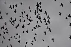 Πουλιά στη διασκέδαση πόλεων της ζωής που ψάχνει τη θέση στο υπόλοιπο Στοκ φωτογραφία με δικαίωμα ελεύθερης χρήσης