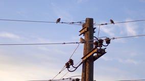 πουλιά στη θέση με τα ηλεκτρικά καλώδια ενάντια στο μπλε ουρανό στην ανατολή Στοκ Φωτογραφίες