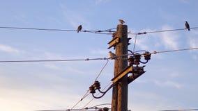 Πουλιά στη θέση με τα ηλεκτρικά καλώδια ενάντια στο μπλε ουρανό Στοκ φωτογραφία με δικαίωμα ελεύθερης χρήσης