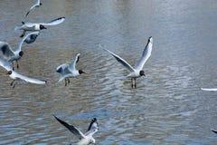 Πουλιά στη λίμνη στοκ εικόνες